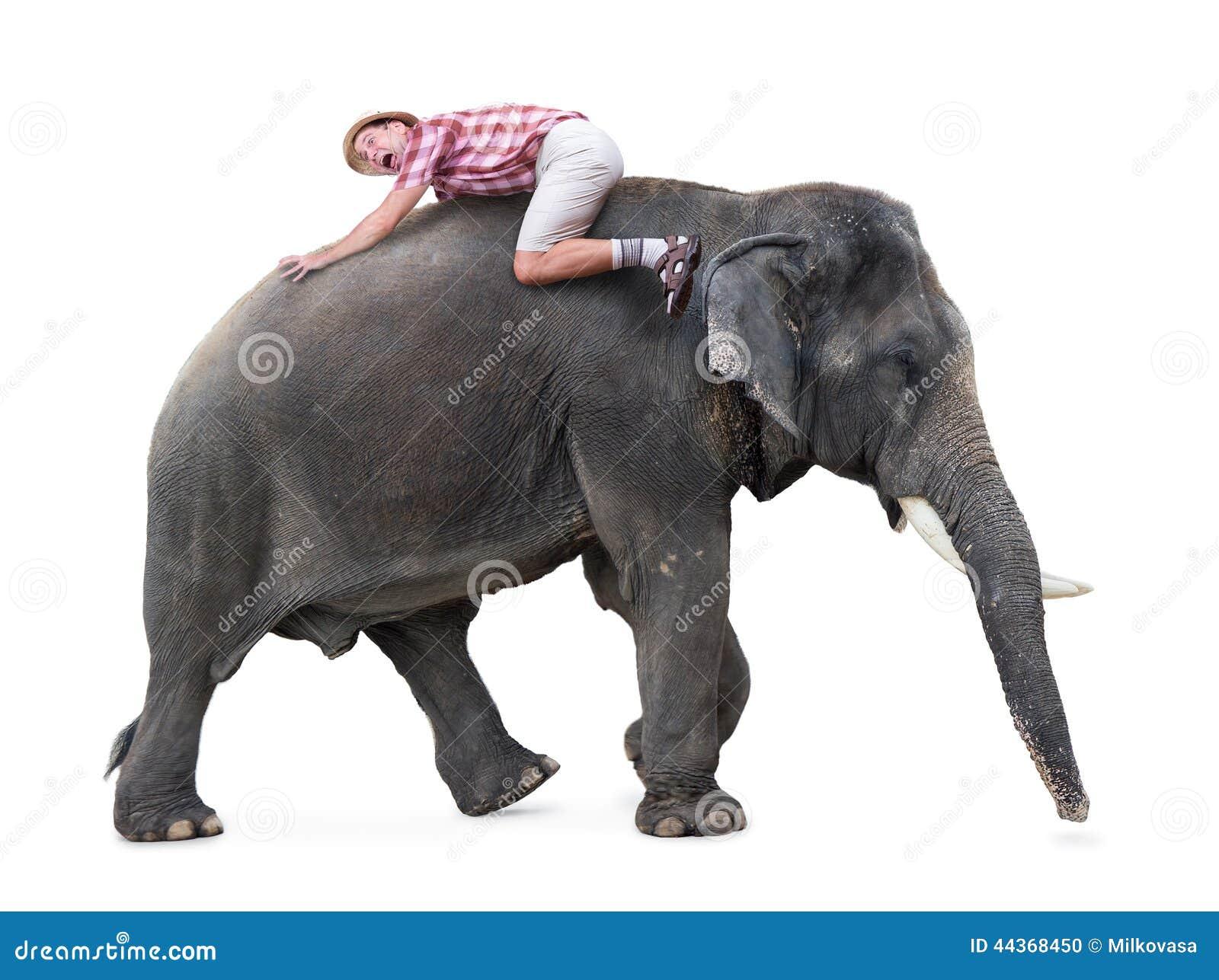 Menzogne turistica terrorizzata su un elefante di camminata