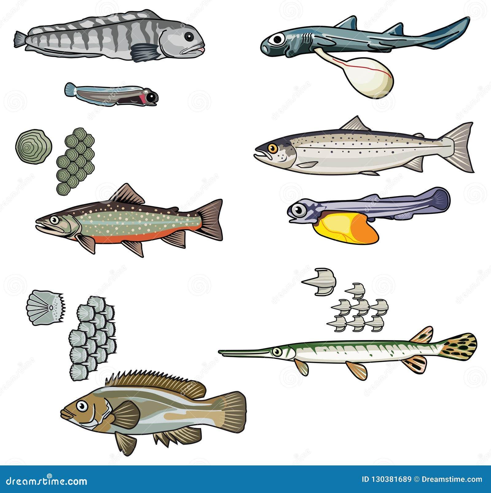 Mer creatures-2 de vecteur