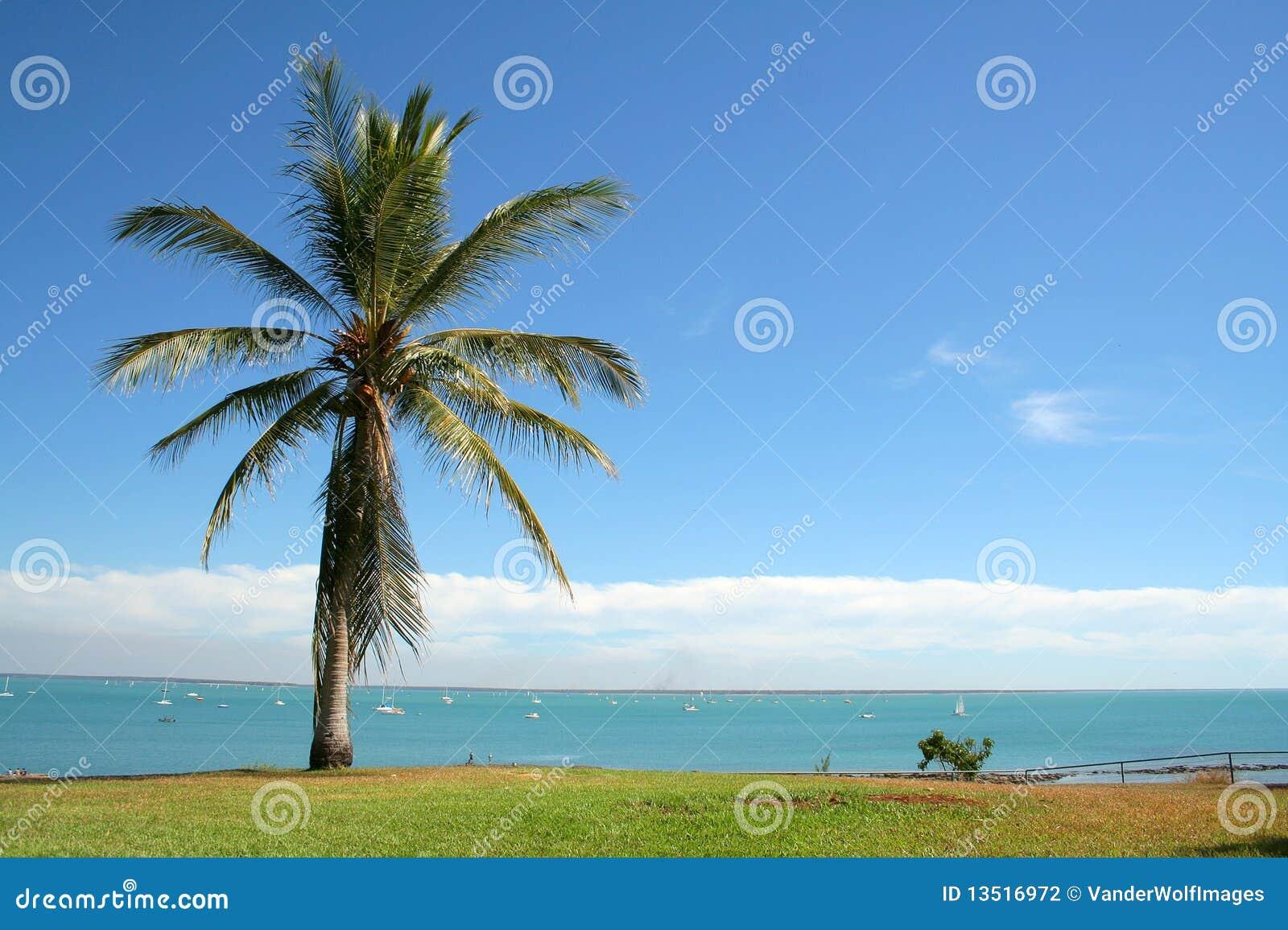 Mer de palmtree de Darwin
