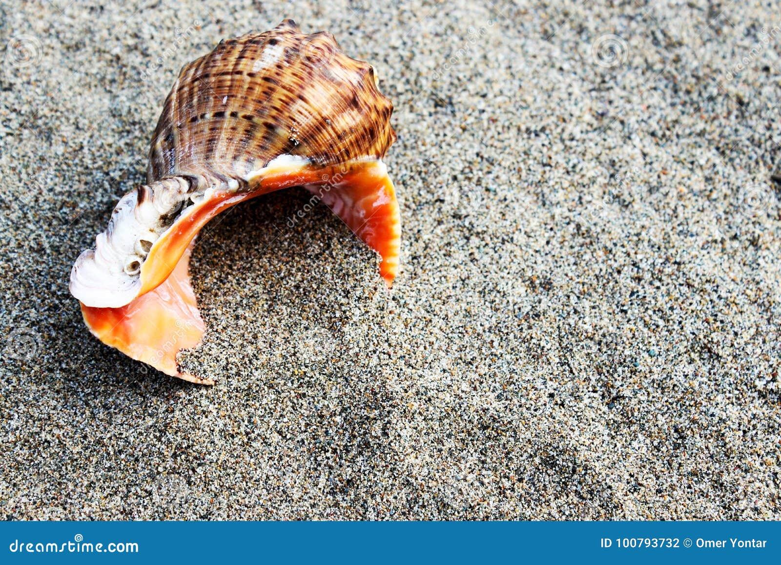 Mer Shell et pierres
