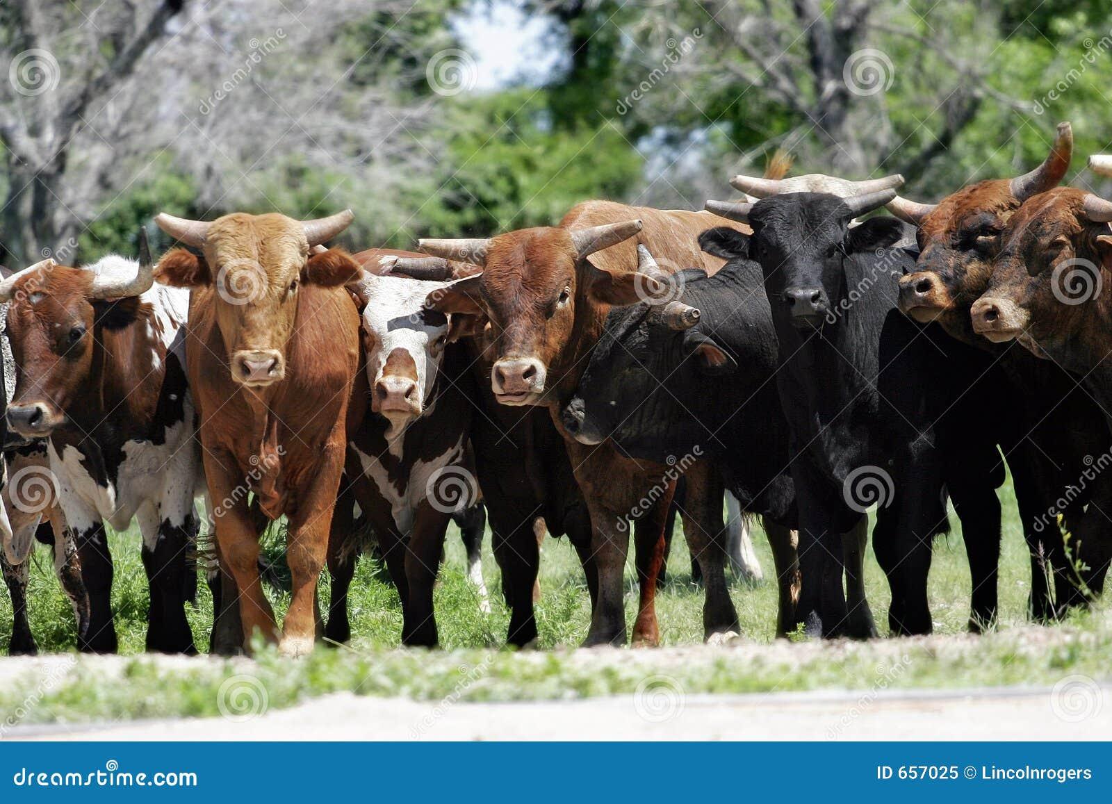 Mercado de Bull