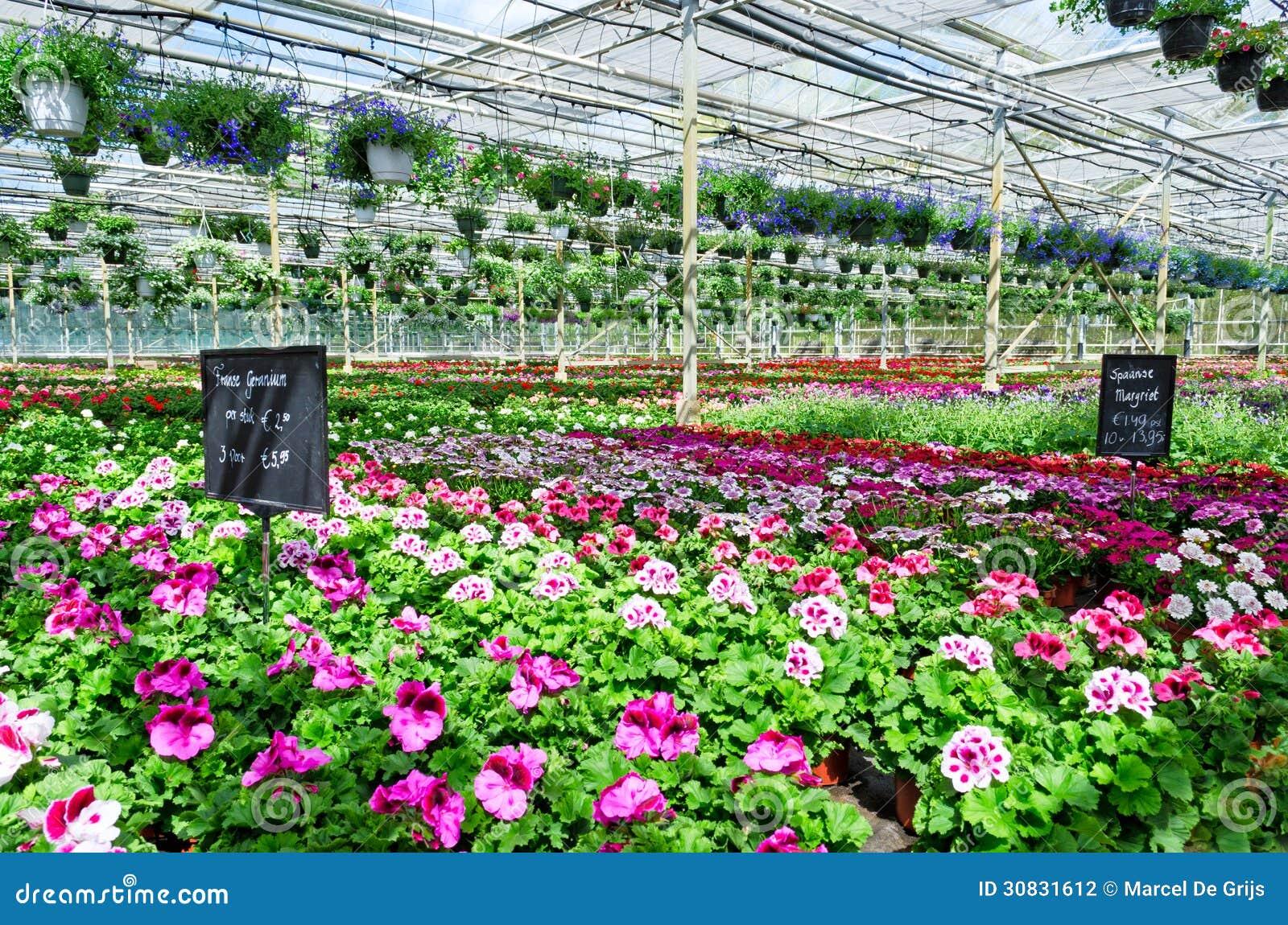 Mercato del fiore del Garden Center