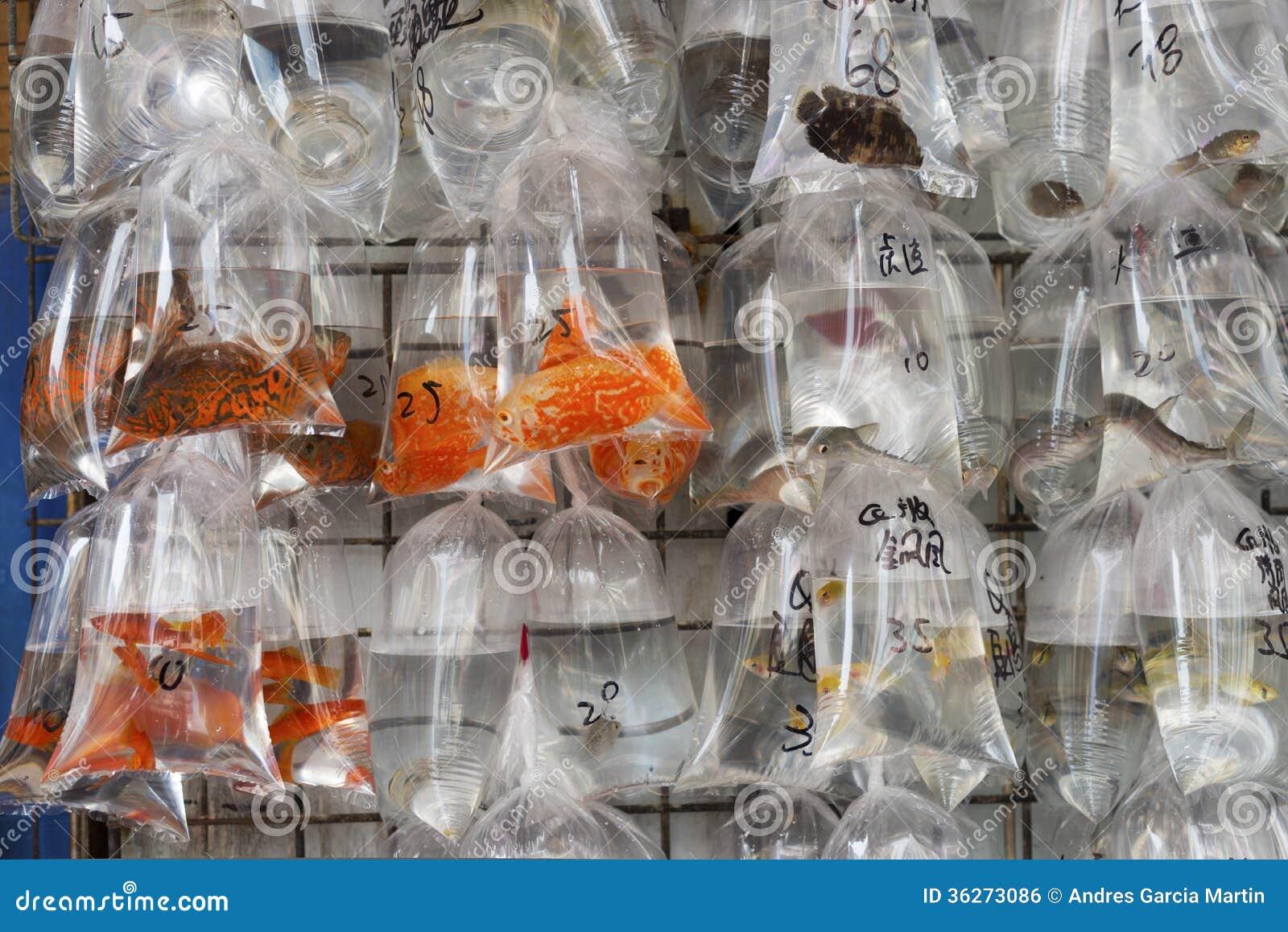 Mercato del pesce hong kong