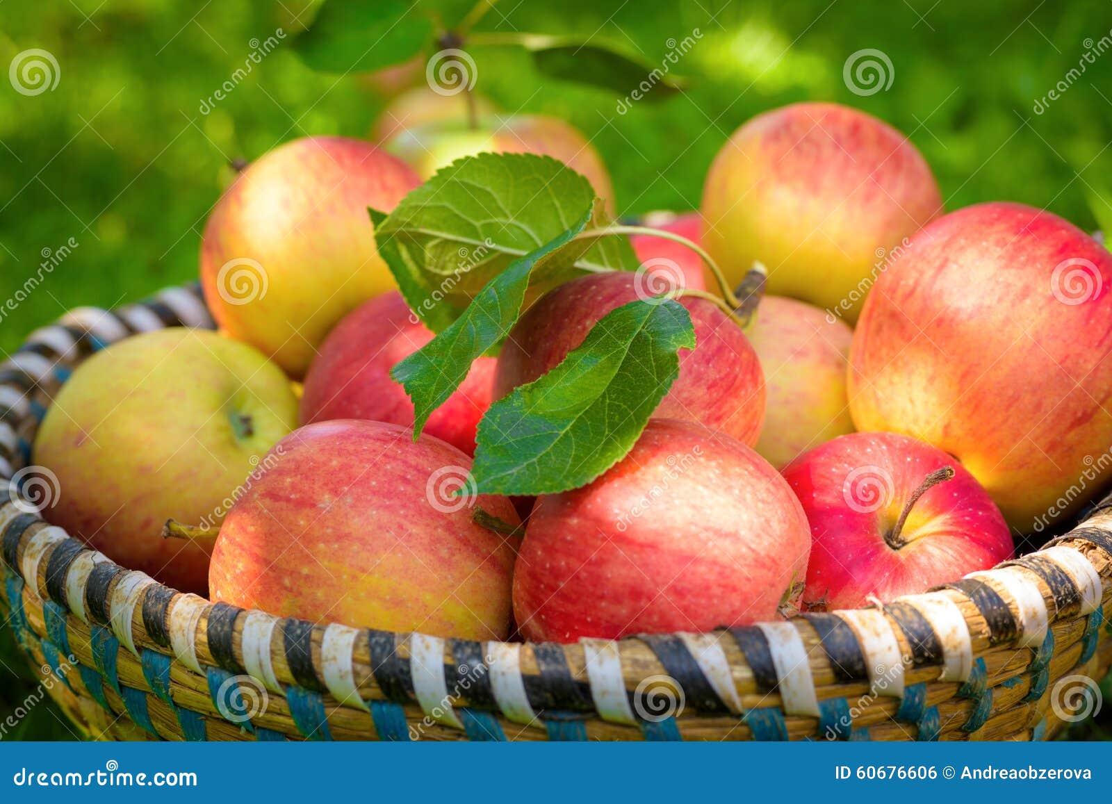 Merce nel carrello organica delle mele, prodotti nostrani freschi