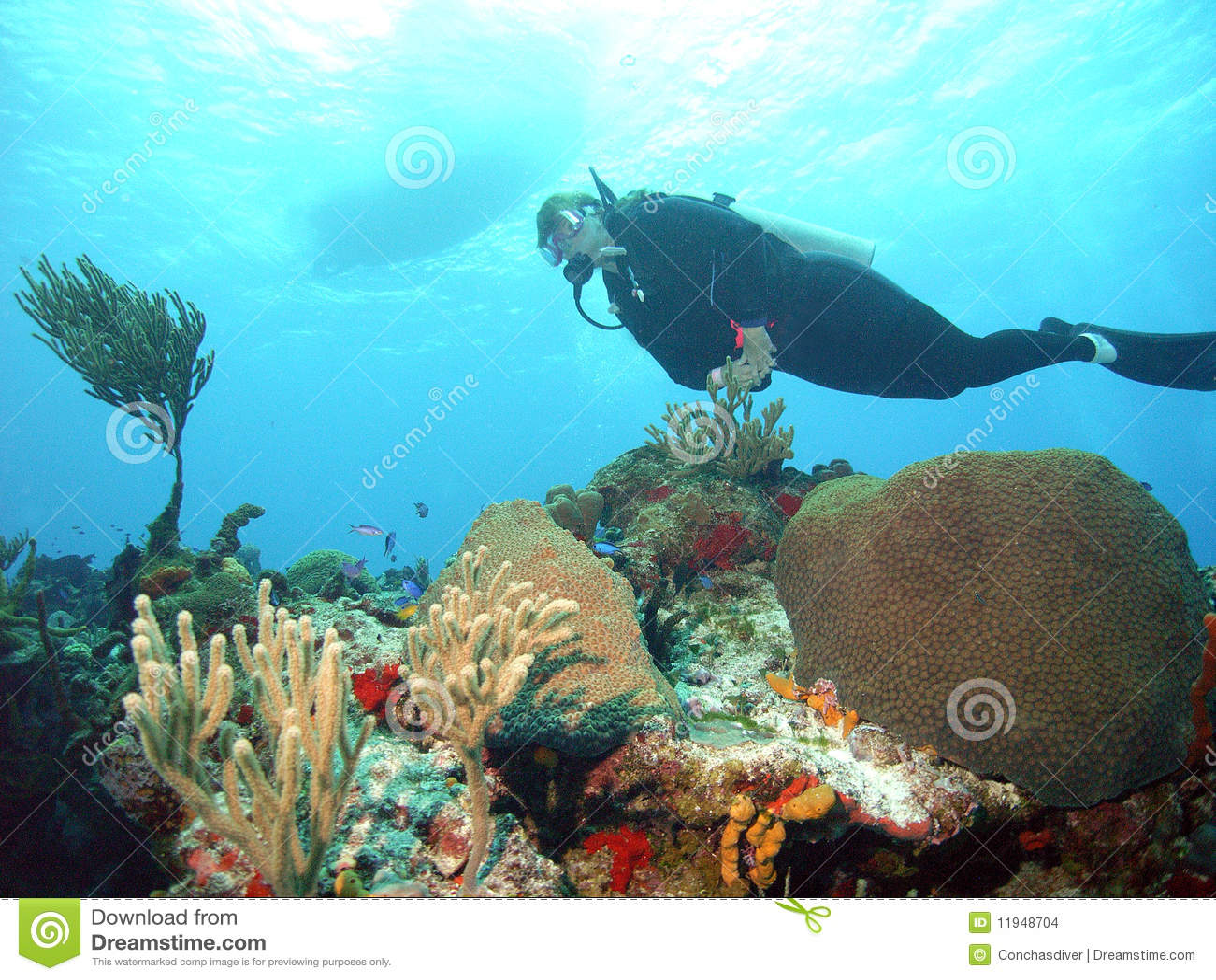 Mergulhador coral