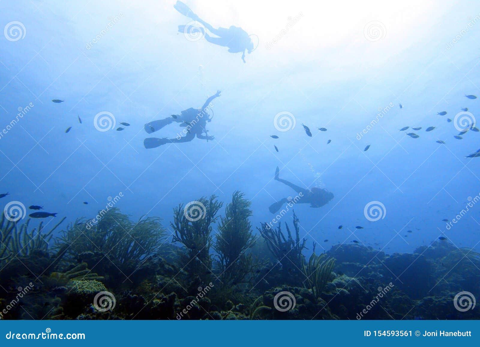 Mergulhador de mergulhador no oceano