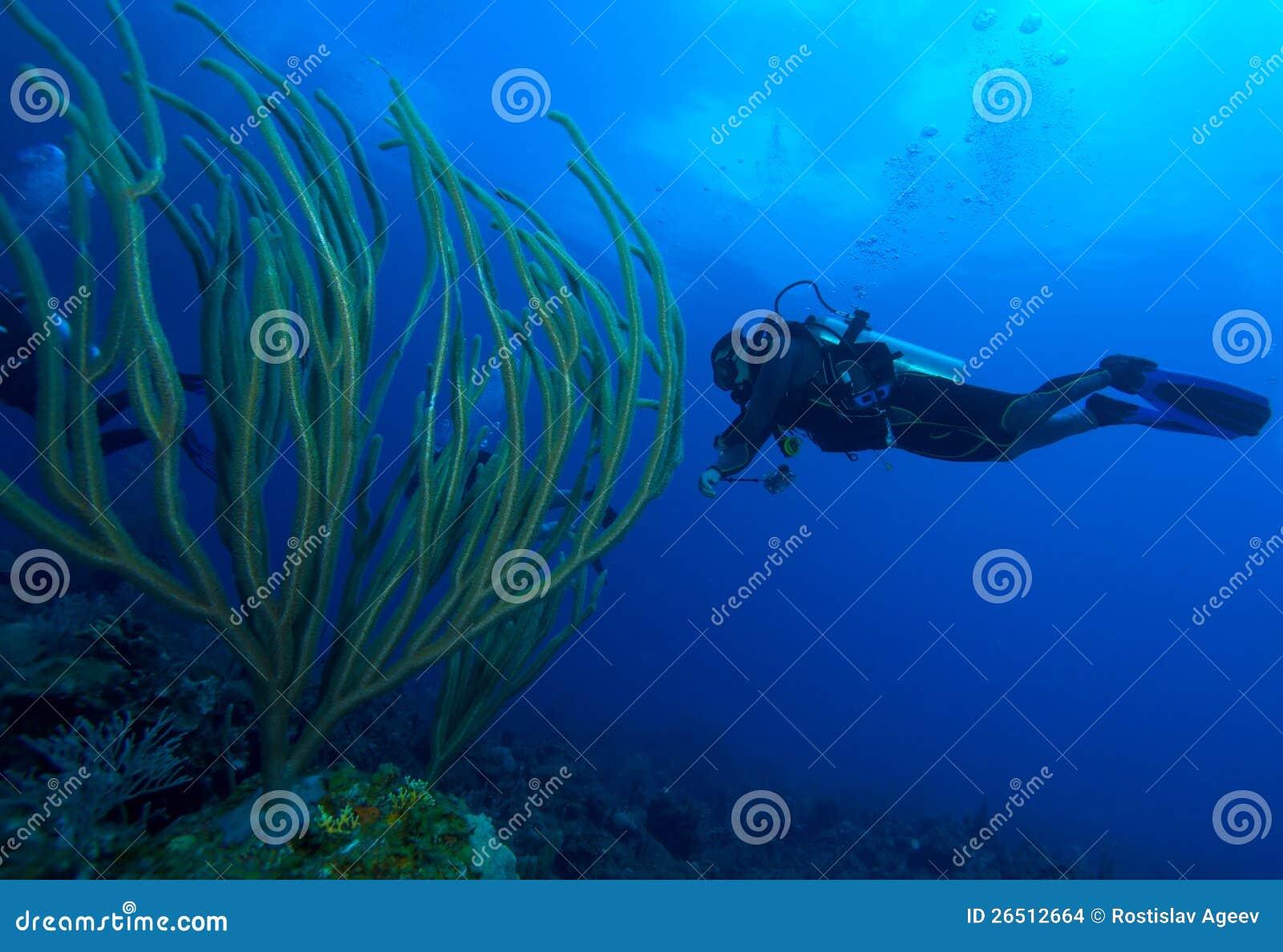 Mergulhador e corais macios, Largo de Cayo, Cuba
