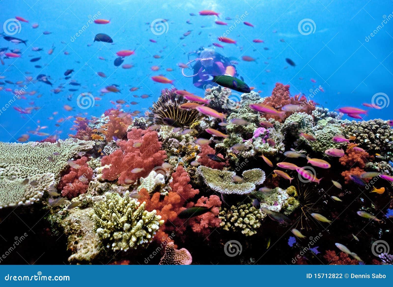 Mergulhador no recife do Astrolabe