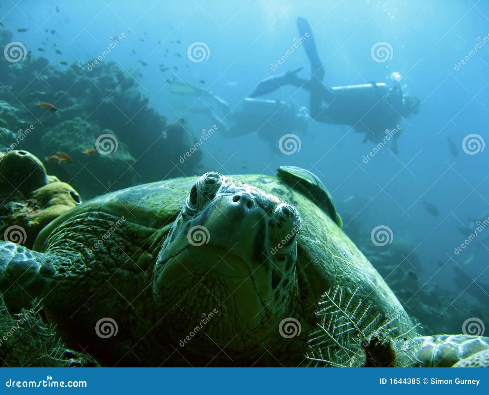 Mergulhadores da tartaruga