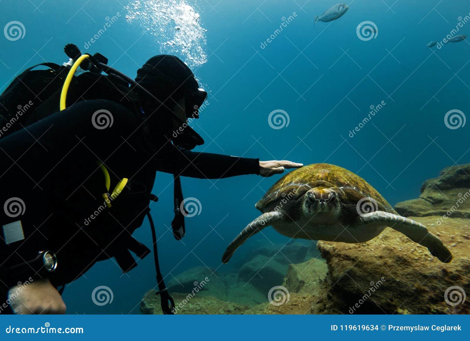 Mergulhadores e tartaruga