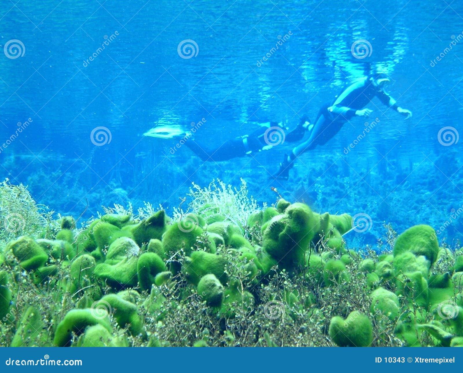 Mergulho da mola