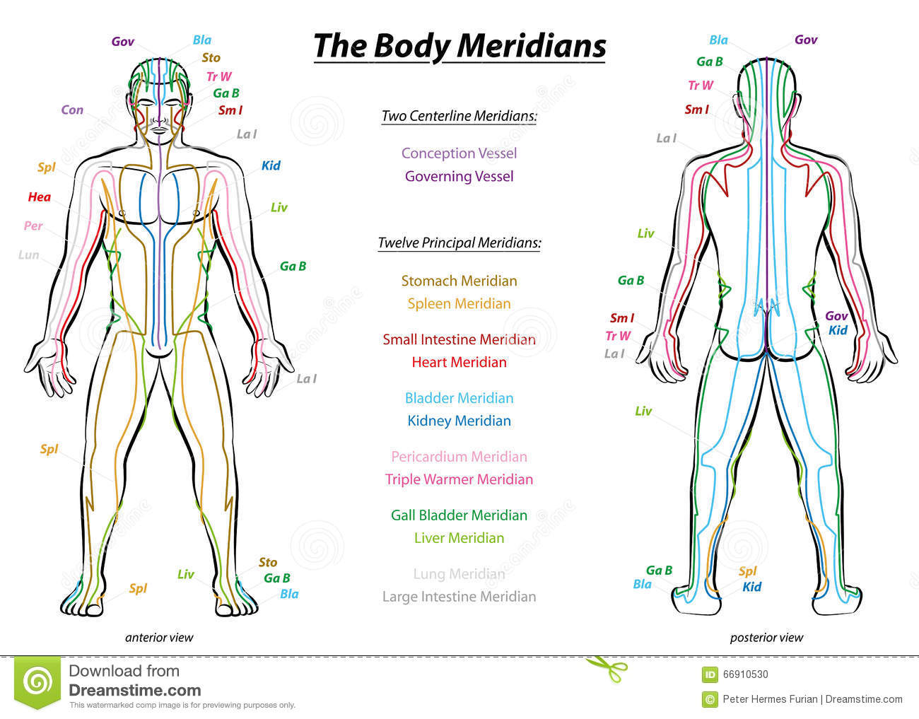 Image result for acupuncture meridian chart