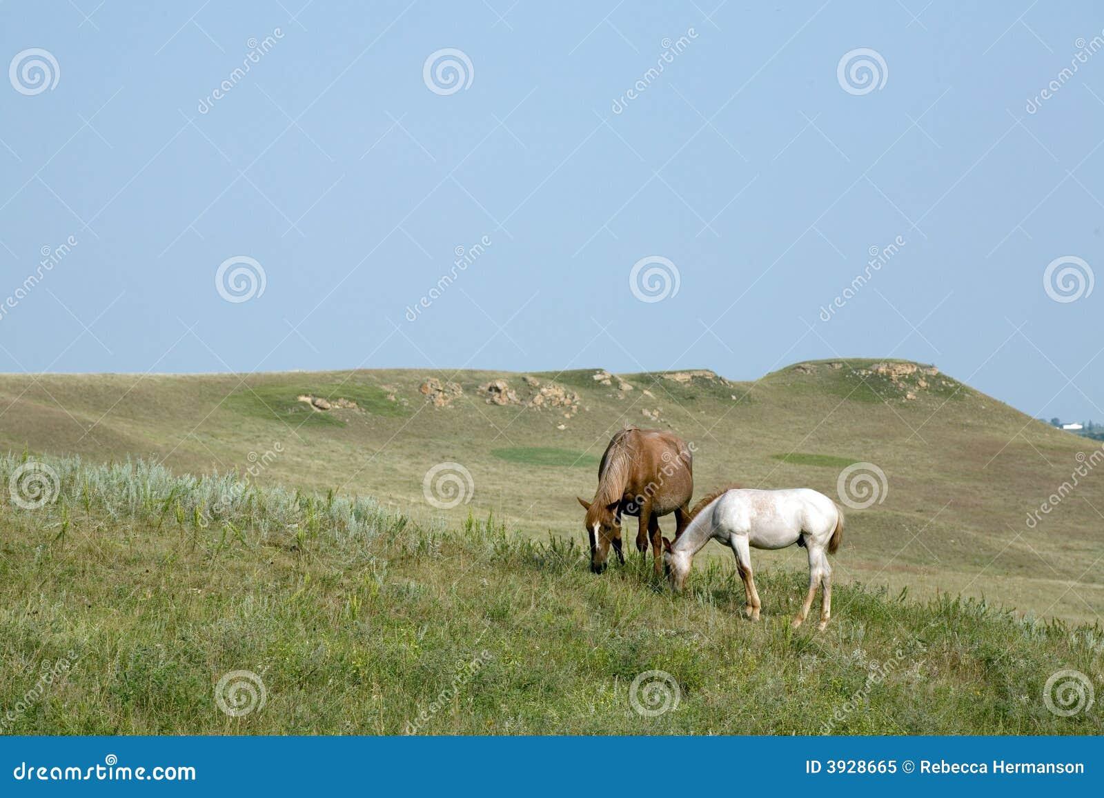 Merrie en het Paard van het Kwart van het Veulen