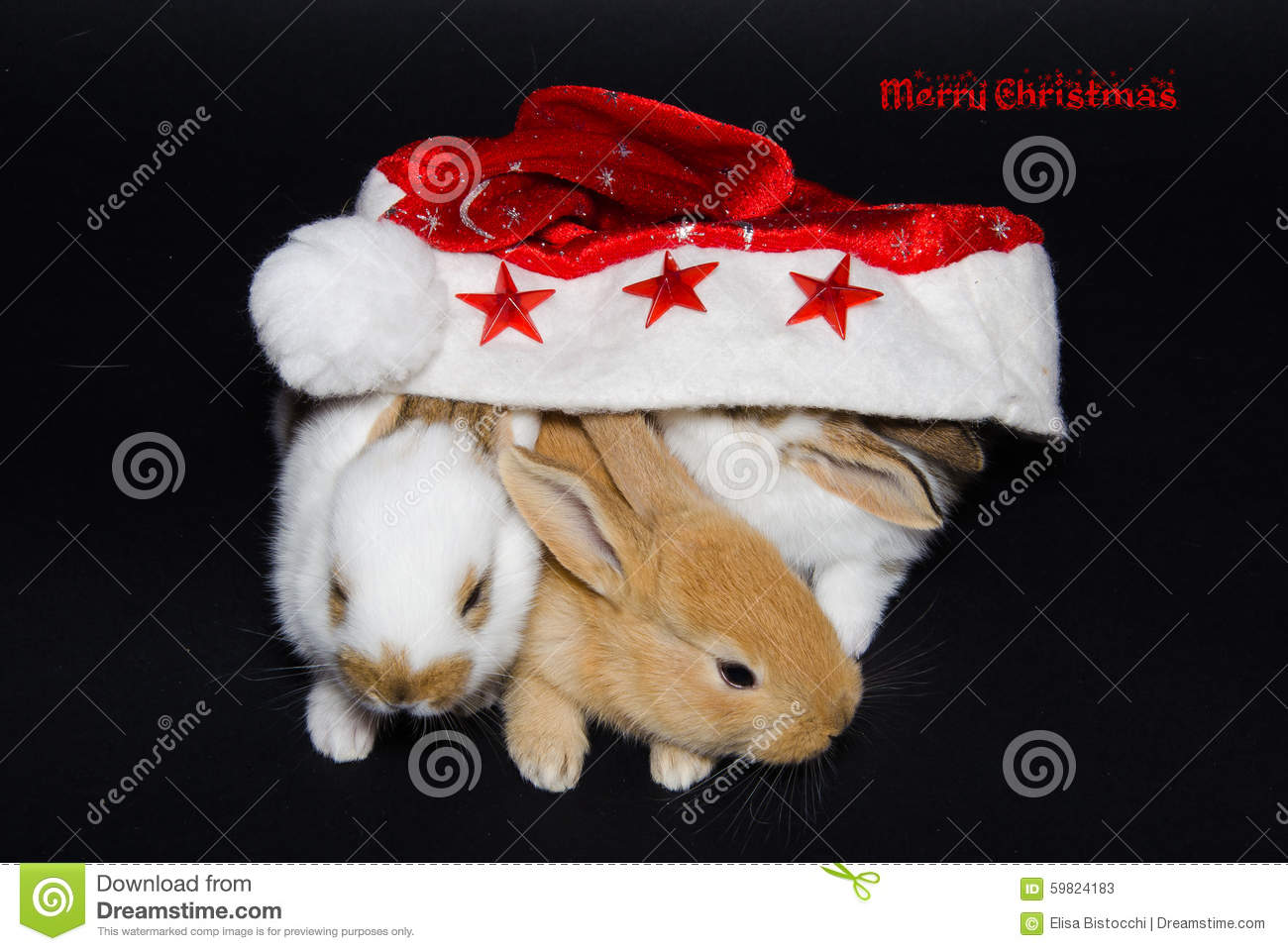 Merry Christmas Card With Animals Stock Photo Image