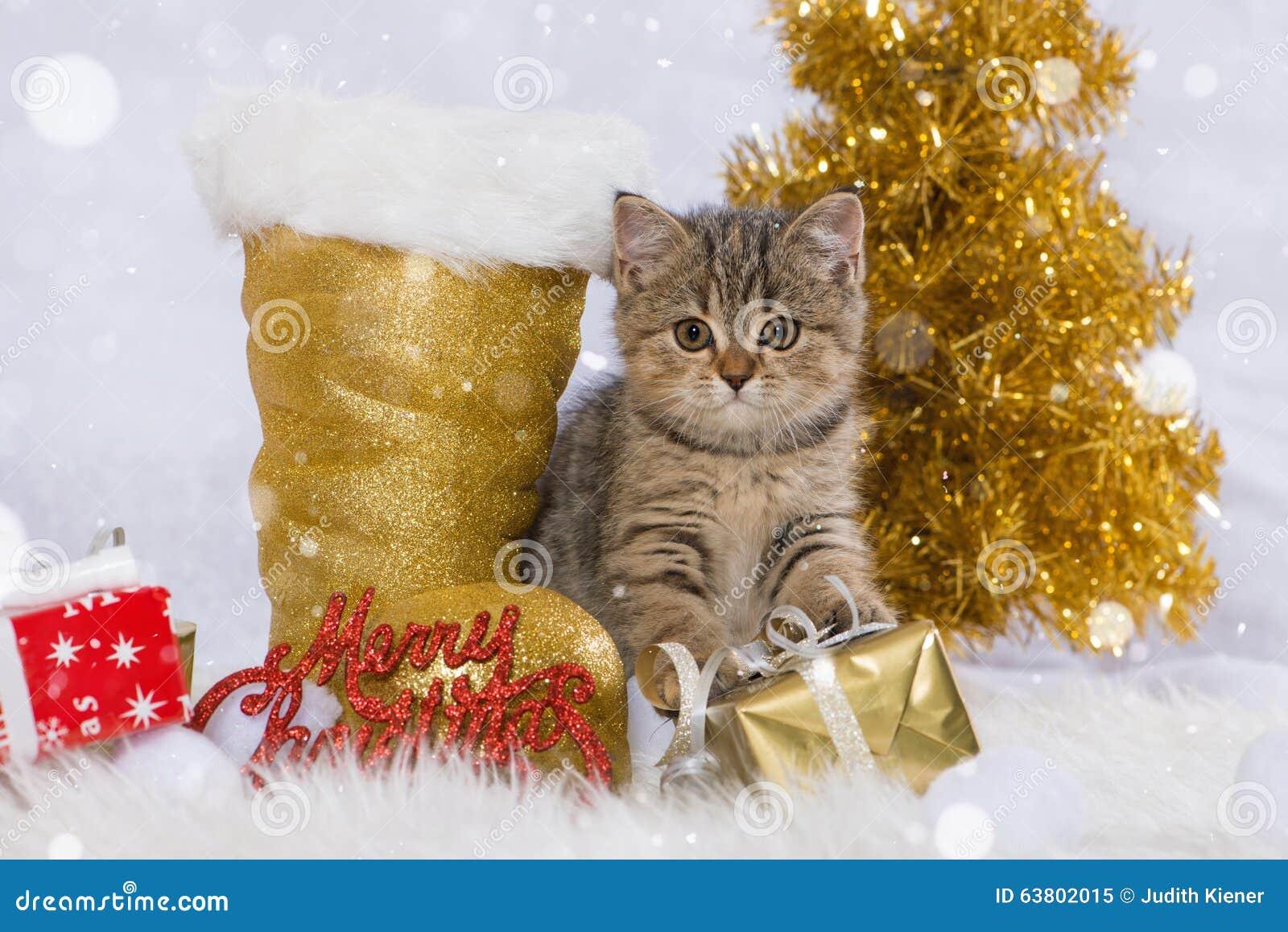 merry christmas cat - Merry Christmas Cat