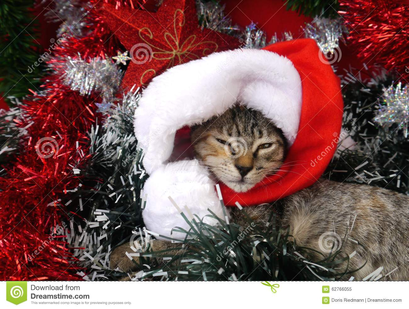 cristmas card decoration and santa claus and happy new year cats