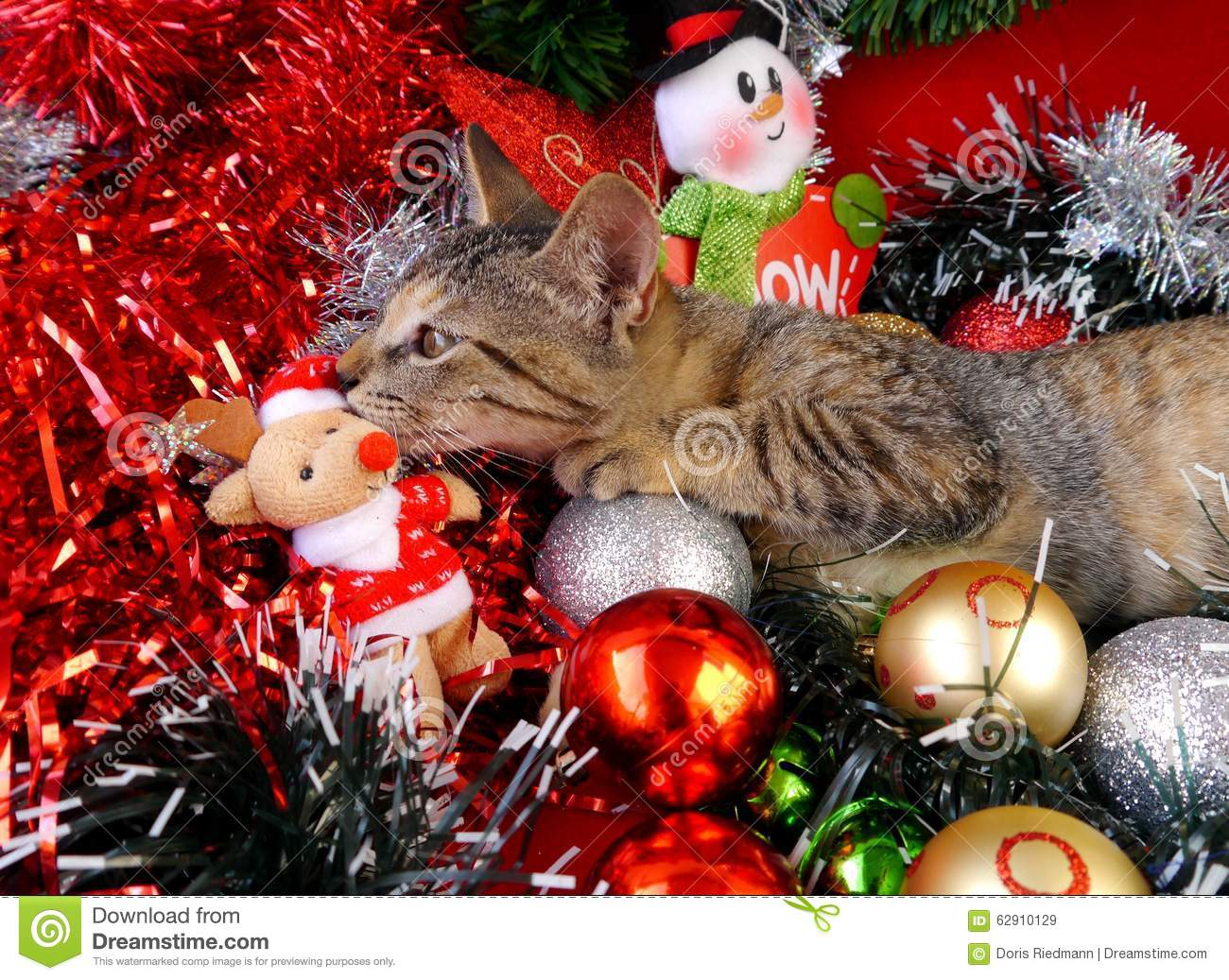 merry christmas and a happy new year cards cats