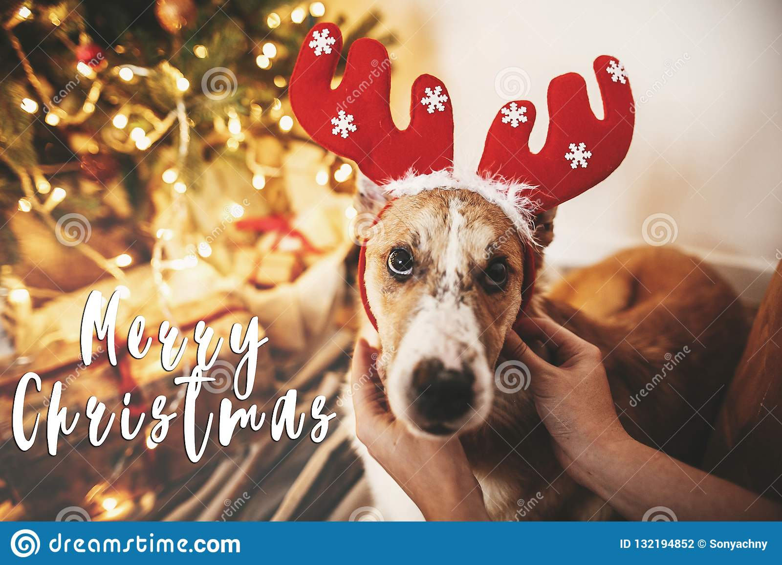 Merry Christmas text on dog with reindeer antlers sitting at gol