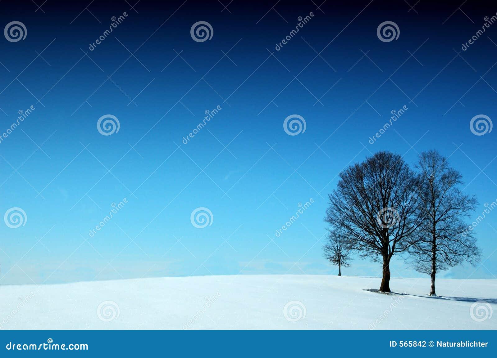 Merveille de l hiver