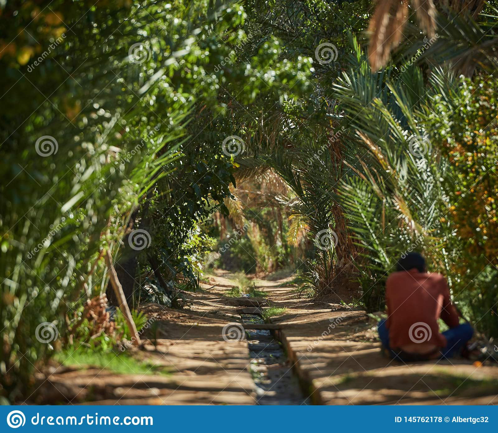 Merzouga,摩洛哥- 2018年12月04日:有一条小河的棕榈隧道在中部,在摩洛哥的绿洲