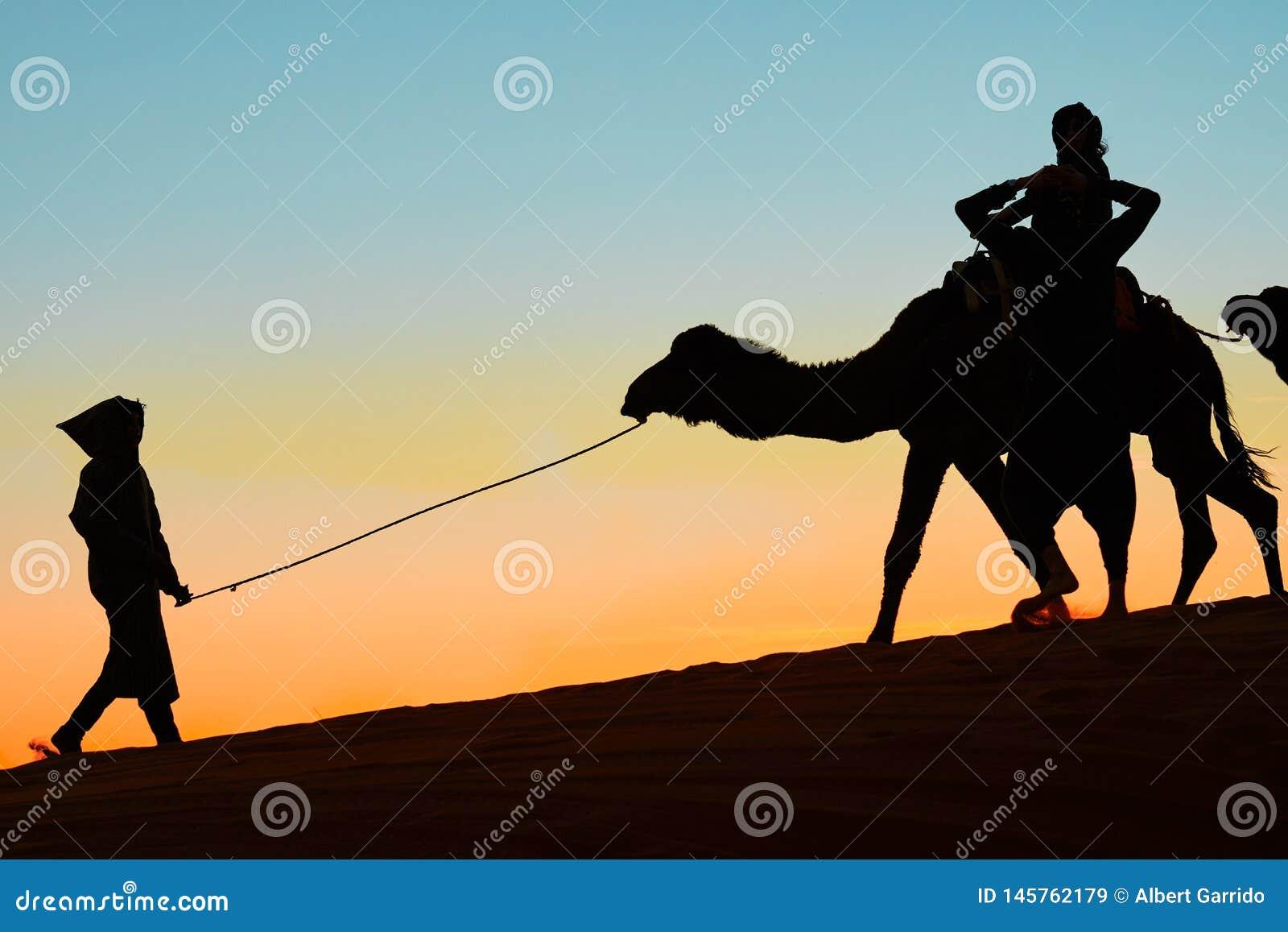 Merzouga, Marocco - 3 dicembre 2018: tramonto dei cammelli della lampadina