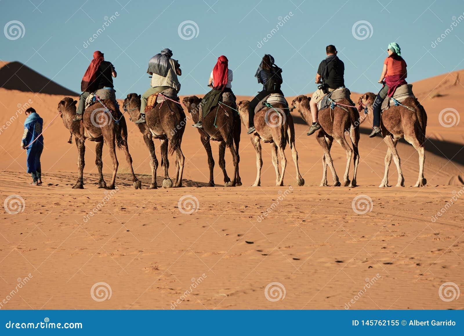 Merzouga, Marokko - 5. Dezember 2018: Kamelexkursion in der merzouga Wüste