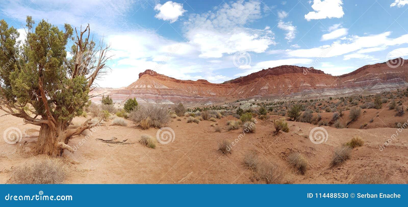 Mesa和沙漠风景,犹他