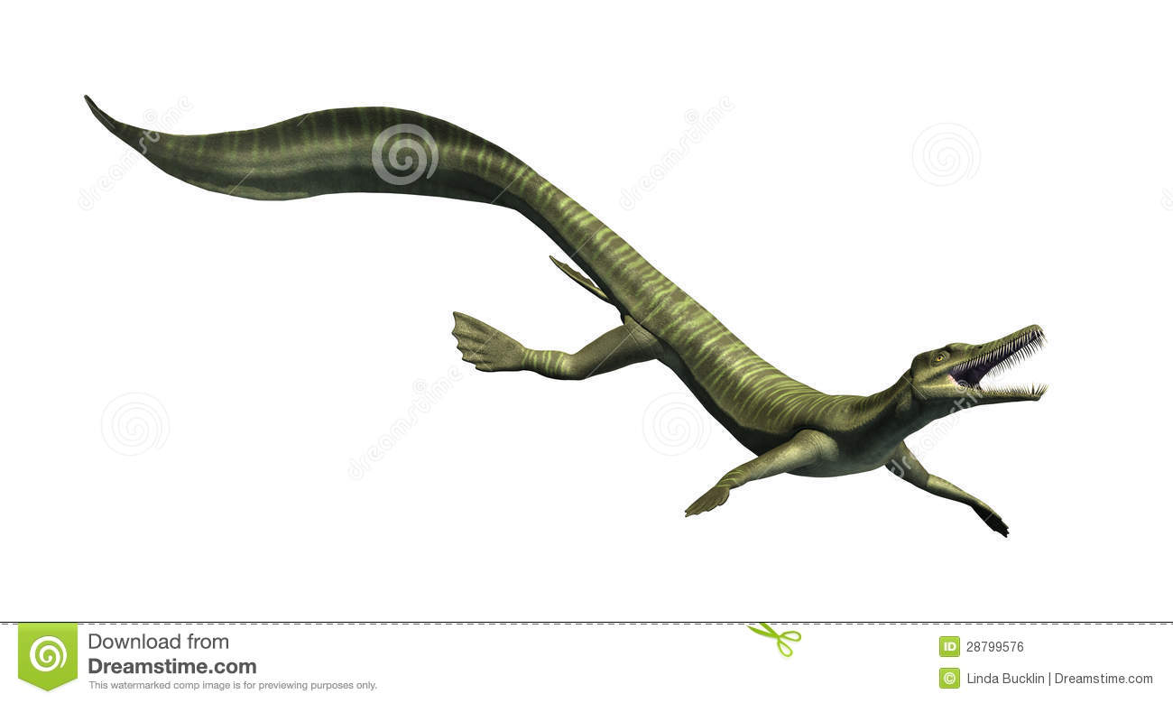 The Mesosaurus was an aquatic dinosaur that lived during the Permian ...