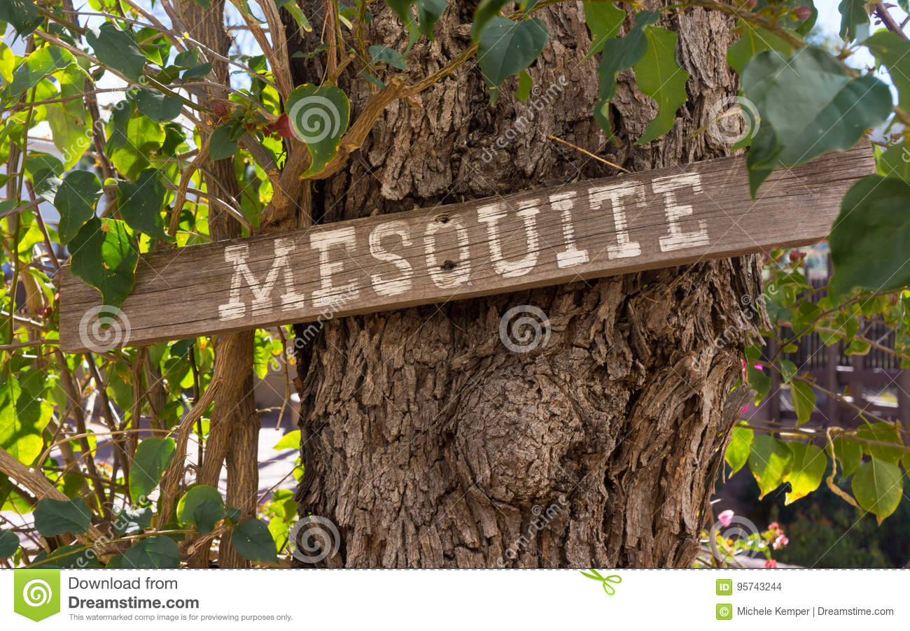 Mesquite Sign On Mesquite Tree Stock Photo - Image of leaves
