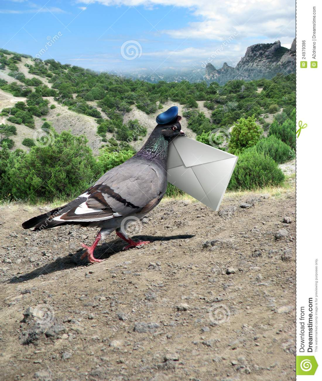One Grey Messenger-pigeon Isolated On White Stock Photo, Picture ...
