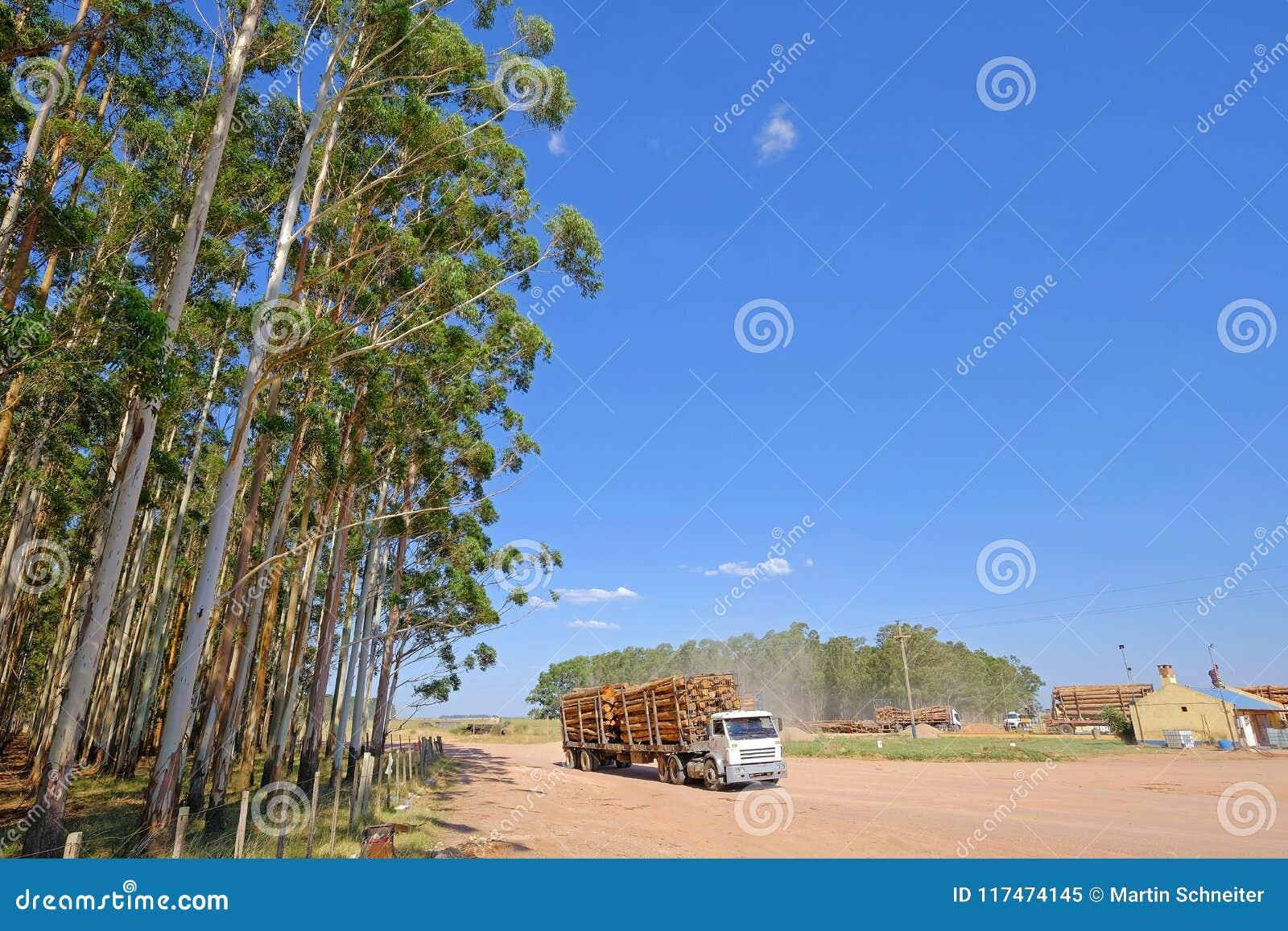 Messwagen mit Eukalyptusklotz für das Papier oder die Holz- und Forstwirtschaft, Uruguay, Südamerika