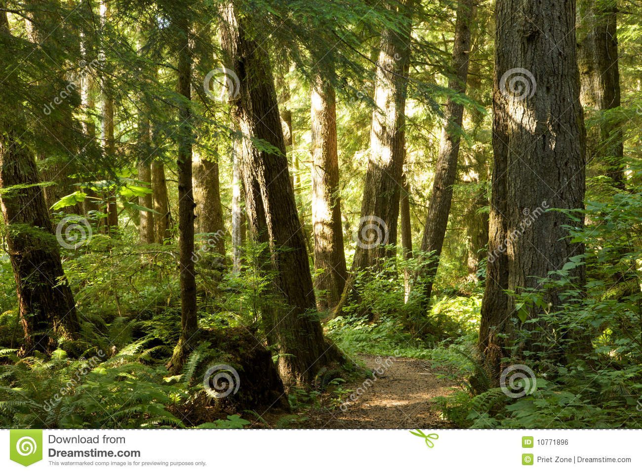 Mest forrest trees