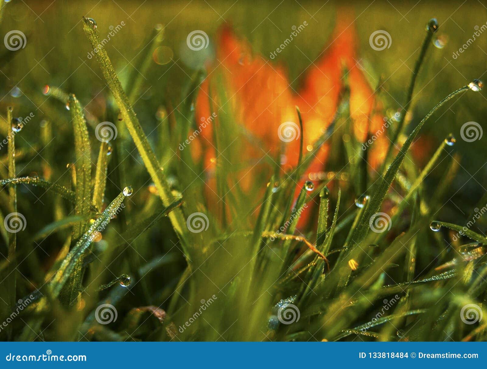 Met dauw bedekt gras met de herfstbladeren