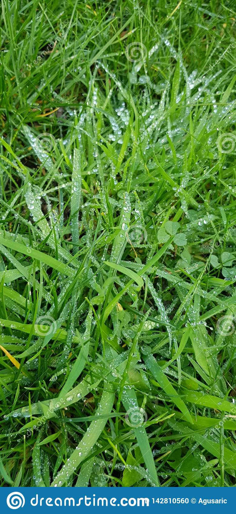 Met dauw bedekt gras