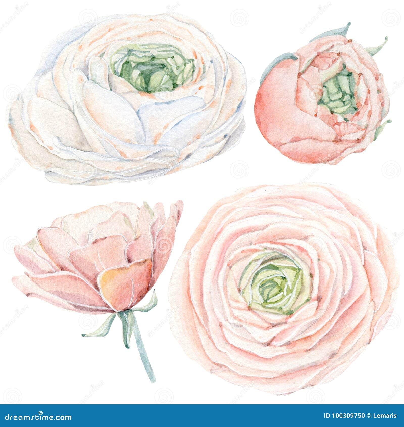Met de hand geschilderde die waterverfbloemen in uitstekende stijl worden geplaatst