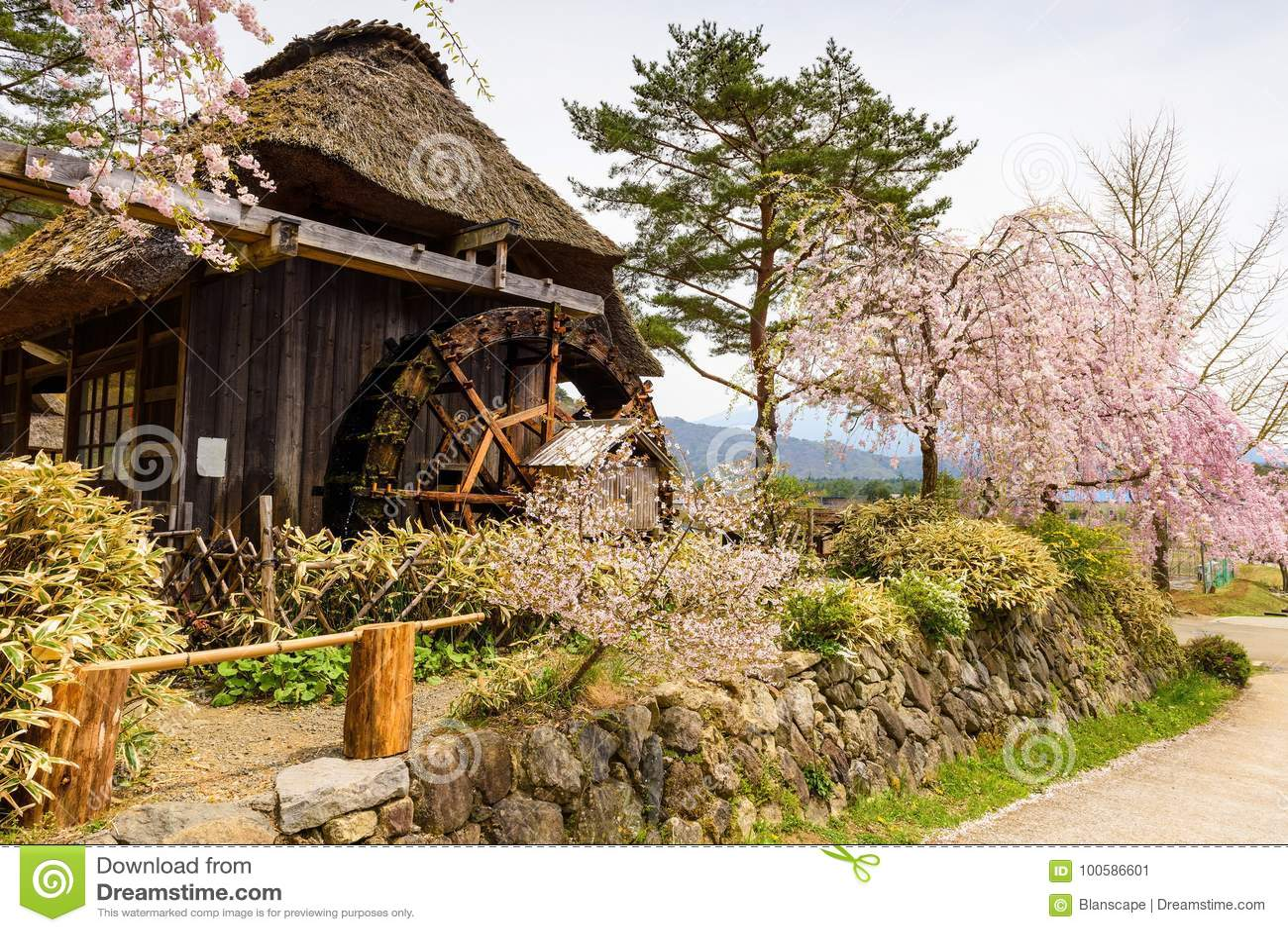 Met stro bedekt blokhuis met roze Kersenbloesem