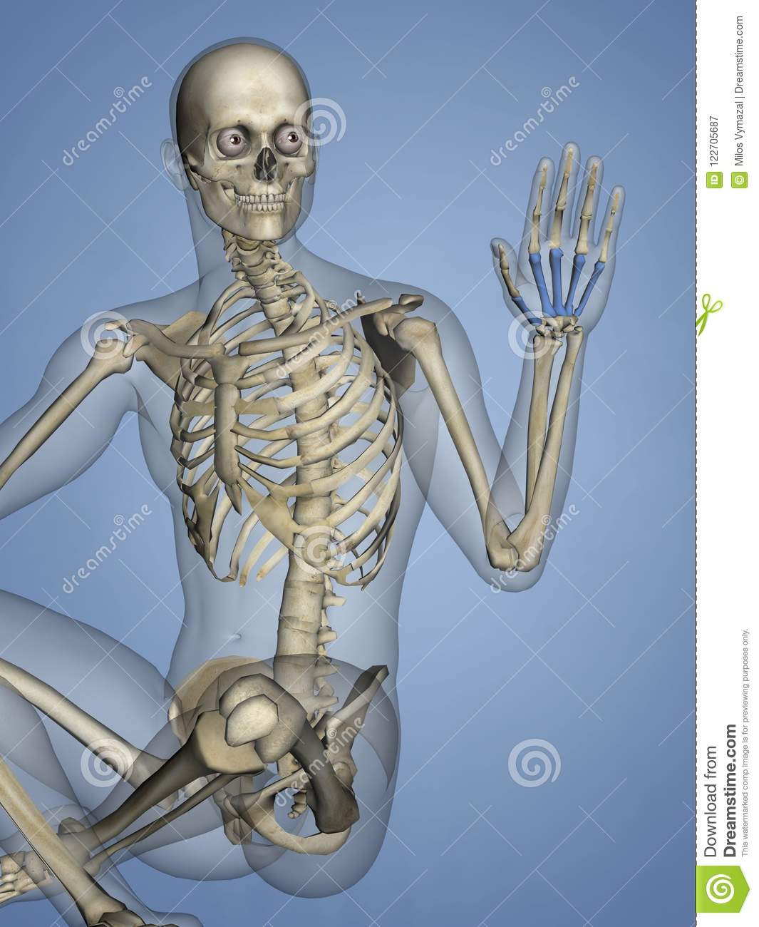 Metacarpus Human Skeleton 3d Model Stock Illustration