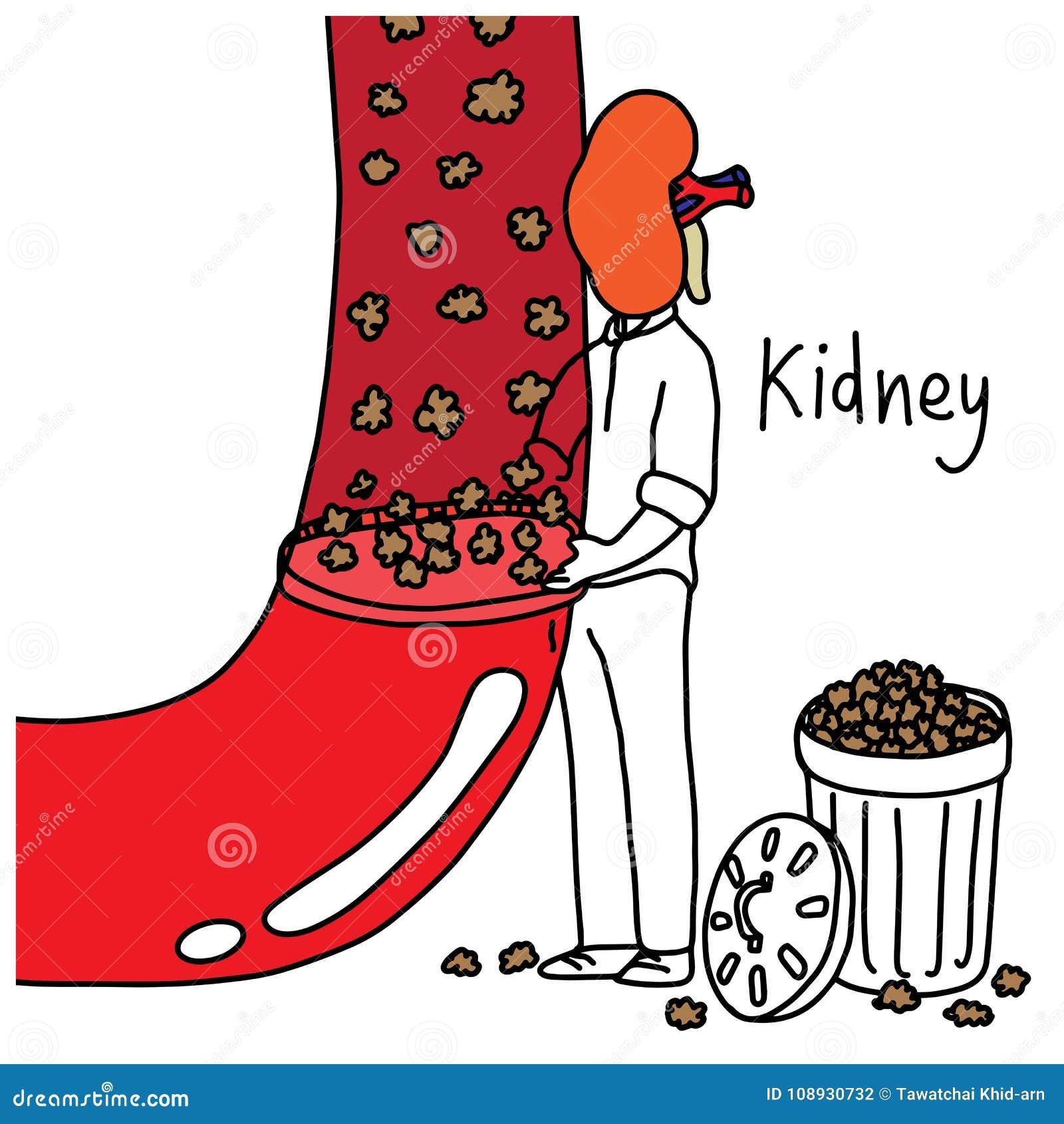 Metaforfunktion av den mänskliga njuren som filtrerar avfalls och överskottsen fl