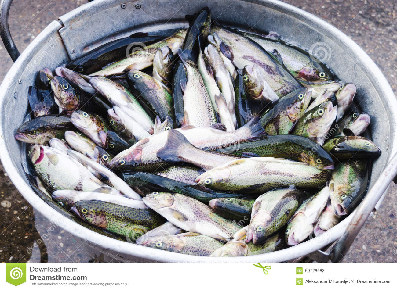 Metal bucket full with fish stock photo image 59728683 for Bucket of fish