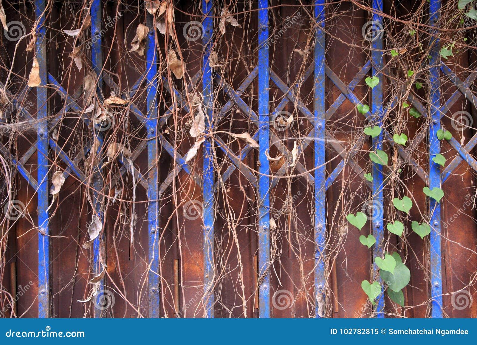 Metal Door In Rust And Plants Stock Image Image Of Texture Plant