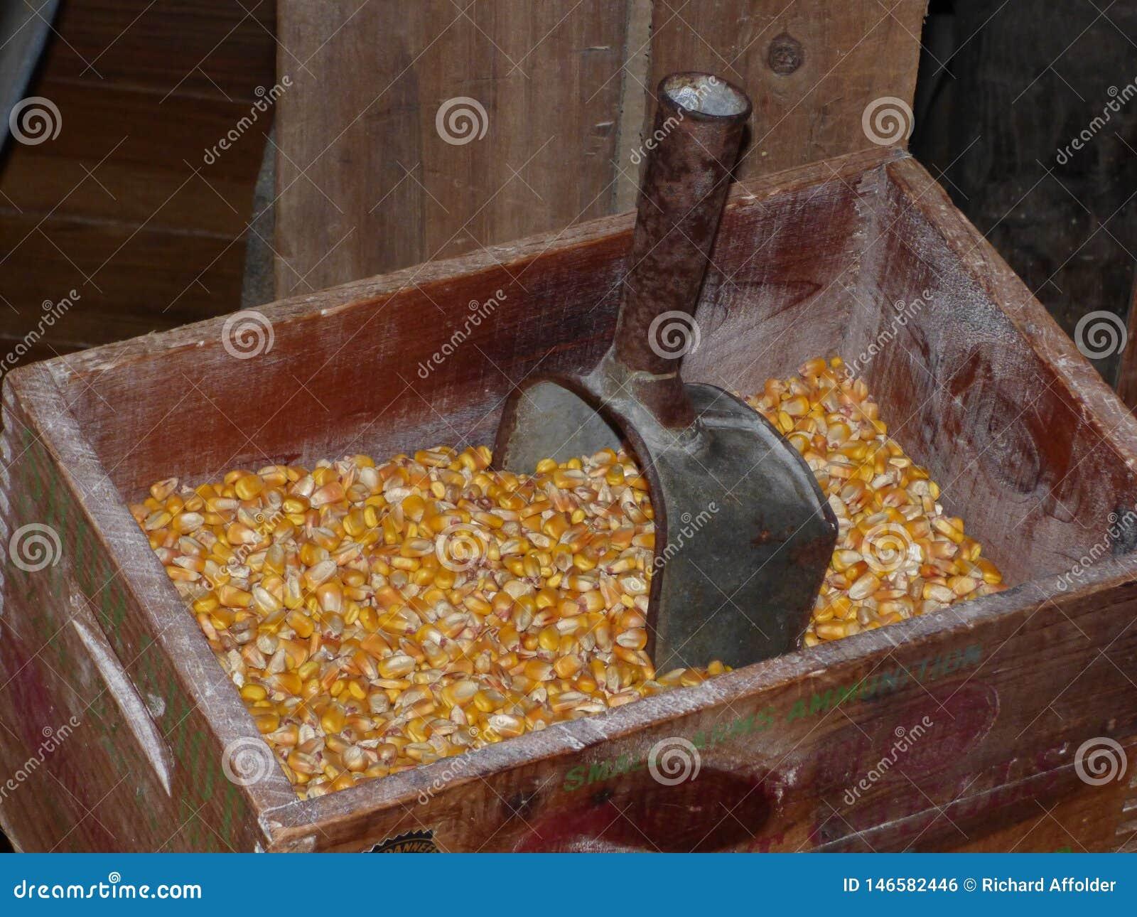 Metal miarka w kukurydzanych nasionach przy Arkansas młynem