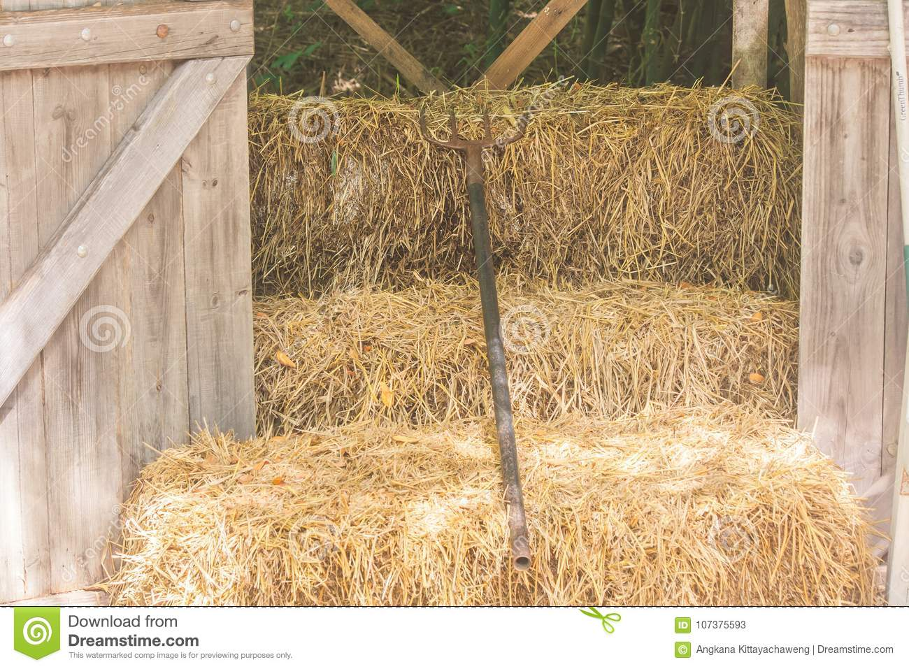 Download Metal Rake Lie On Straw In Wooden Storage At Countryside In  Vintage Style. Stock