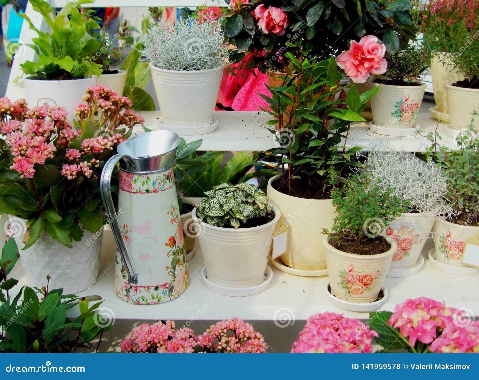 Metall som bevattnar kan för att bevattna bland olika blommor och växter