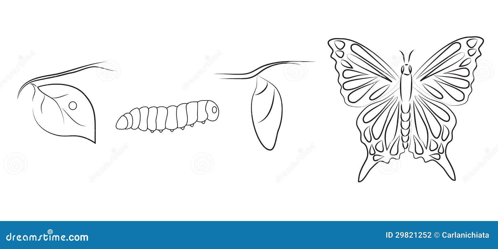 Metamorfose Ilustra 231 227 O Do Vetor Ilustra 231 227 O De Folha