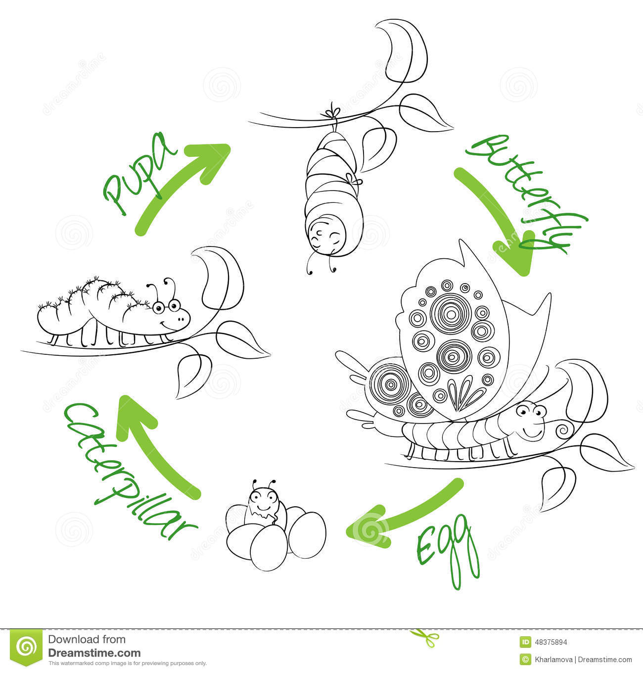 Worksheet What Is The Life Cycle Of A Caterpillar the metamorphosis of butterfly stock vector image 48375894 butterfly