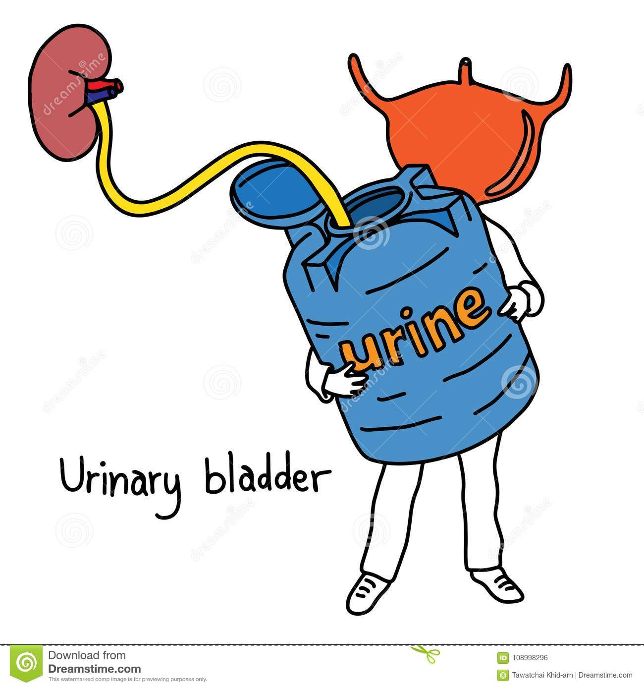Metaphor Function Of Urinary Bladder Is To Store Urine Vector Il