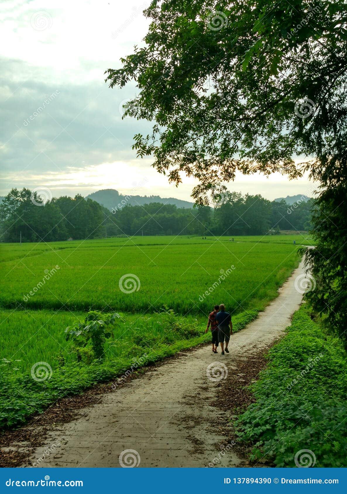 Metgezel op de landweg