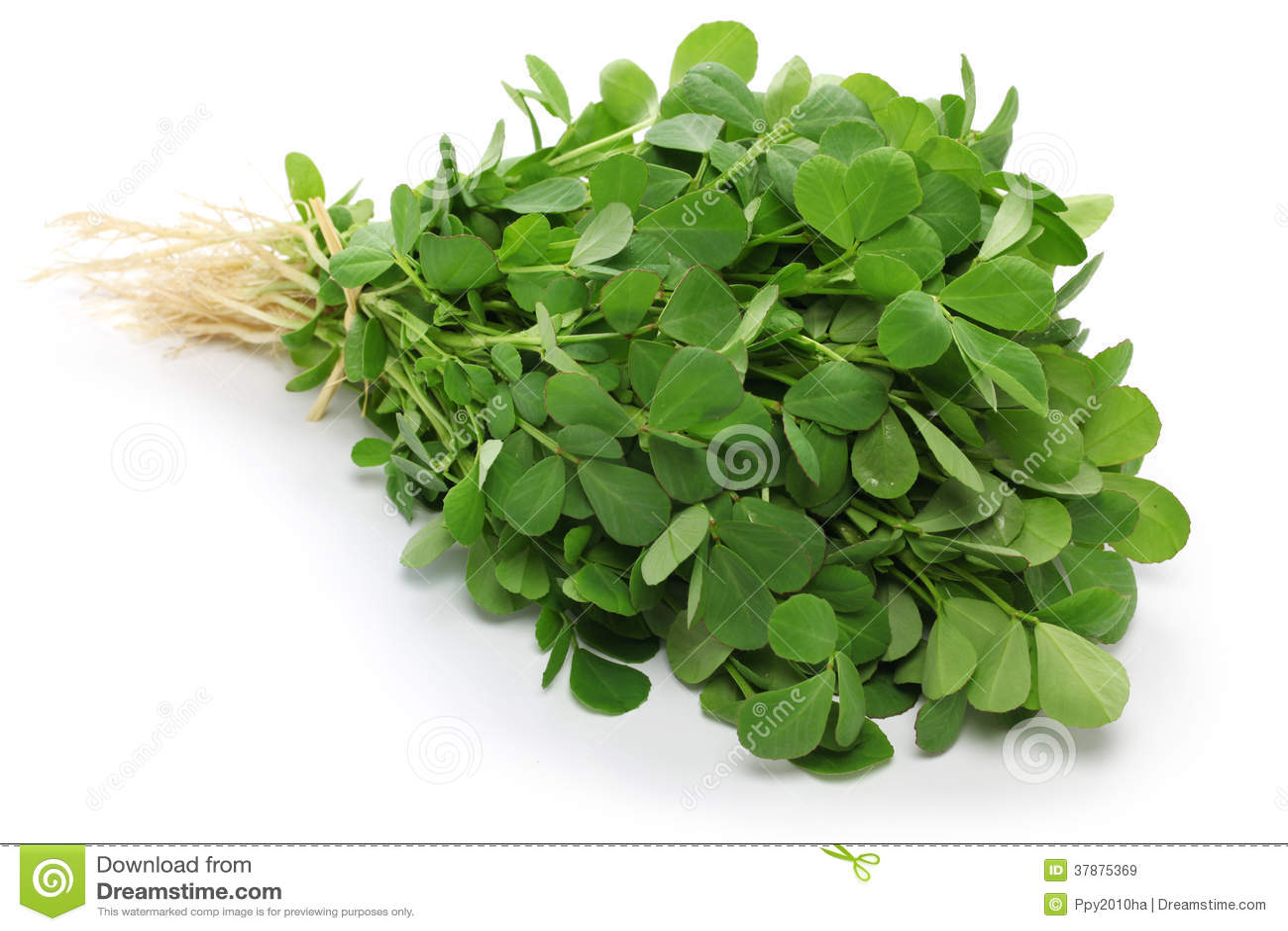 Methi, hojas de la alholva