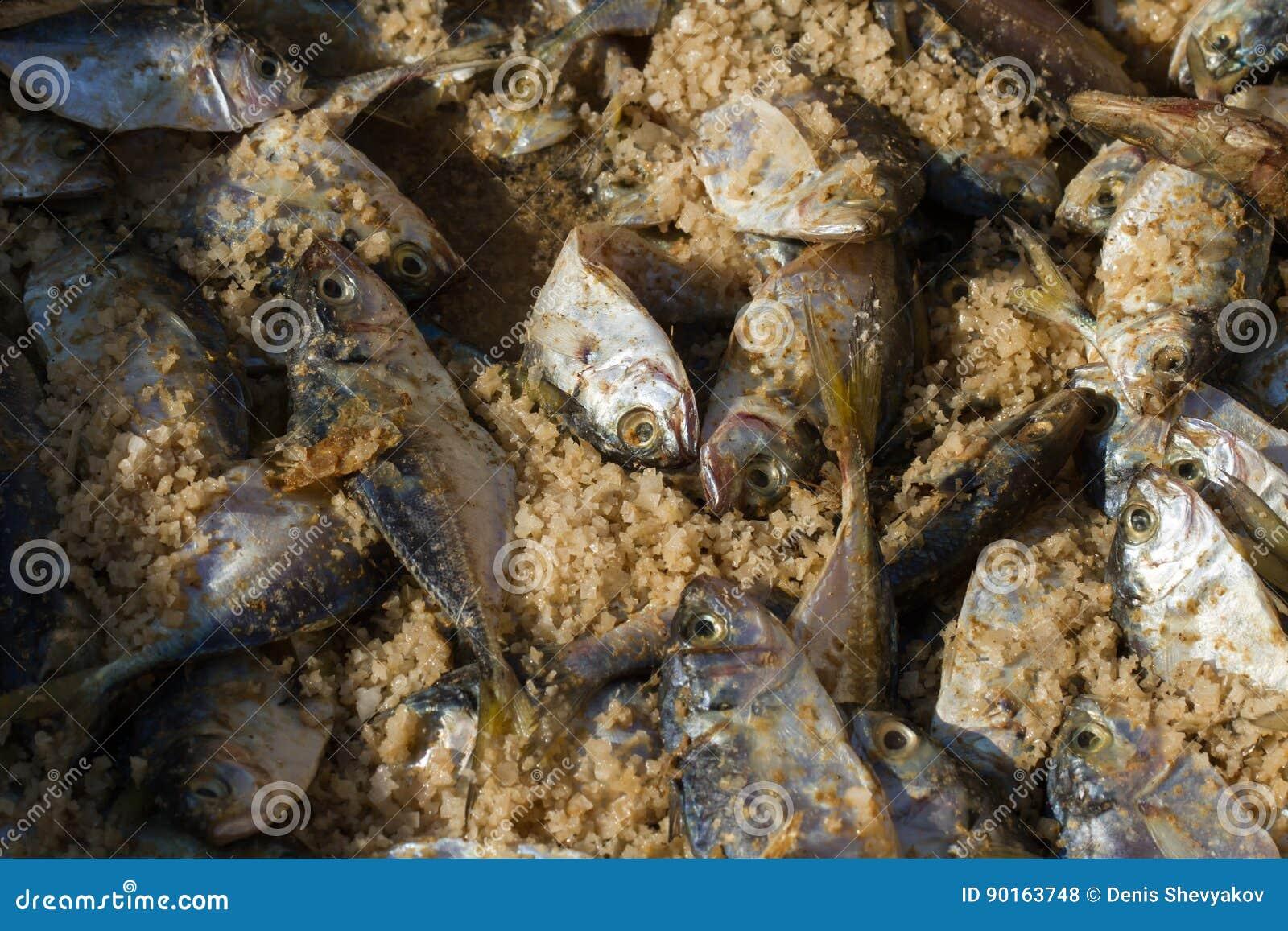 Metodi Di Salare Pesce Grande Sale Marino E Piccolo Pesce Fotografia