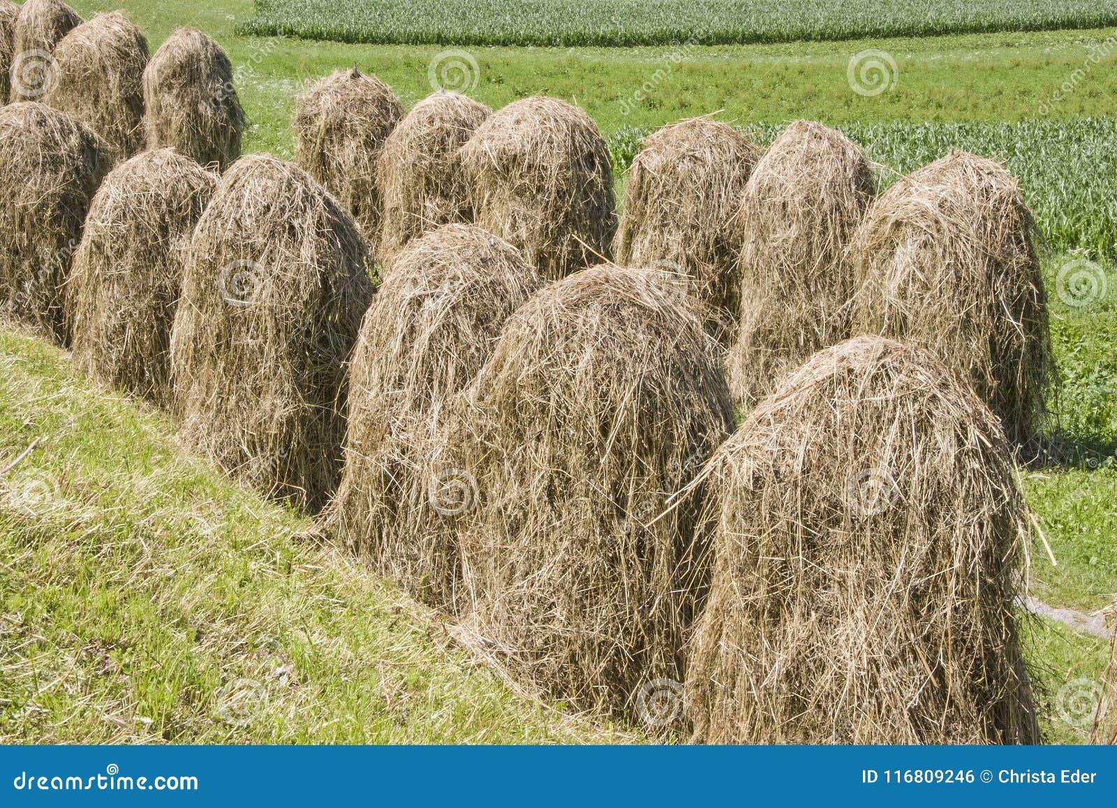 Metodo di essiccazione e di erba di conservazione